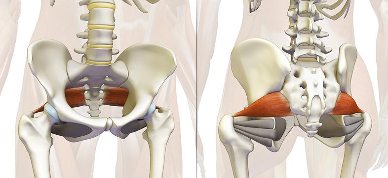 سندرم پیریفورمیس دکتر سیامک مرادی فوق تخصص درد